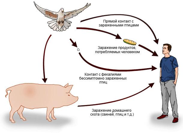 Сальмонеллез. Профилактические меры при инфекционном заболевании